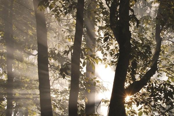 Photo of Mary Thornton Nature Preserve