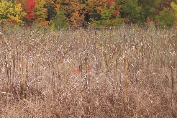 Photo of Glennwood Nature Preserve