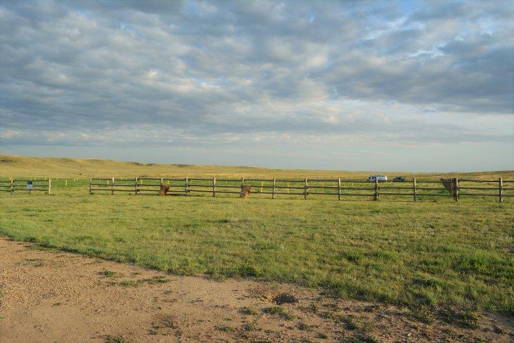 overflow-camping-at-grasslands-np