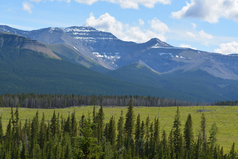 view of mountain bowl beyond a meadow and forest in the Ya Ha Tinda region of Albert Canada