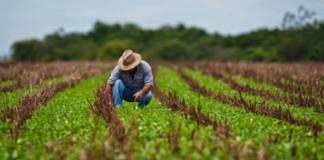 La Secretaría de Agricultura y Desarrollo Rural (SADER), en conjunto con la Secretaría de Desarrollo Agropecuario, Rural y Pesca (SEDARPA) publicaron la convocatoria para el Ejercicio 2019 de los Programas en Concurrencia con las entidades federativas.