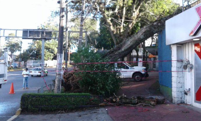 Este lunes, un tulipán africano cayó sobre una vivienda en la avenida Ávila Camacho, frente a la gasolinera del parque 'Los Tecajetes'.