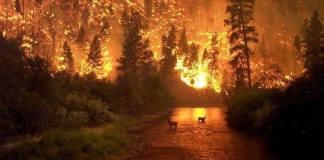 El Amazonas de Brasil se incendió desde hace dos semanas, gracias a la deforestación que ha aumentado 60 por ciento durante el mes de junio, con respecto al mismo periodo del 2018.