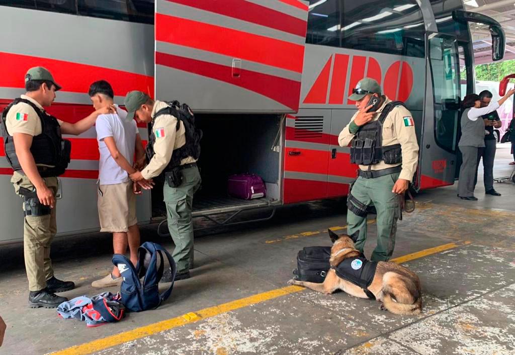 Elementos de Fuerza Civil de la Secretaría de Seguridad Pública (SSP), detuvieron a dos hombres en la Central de Autobuses de Xalapa (CAXA), por el presunto delito contra la salud, al detectárseles droga en equipajes diferentes.