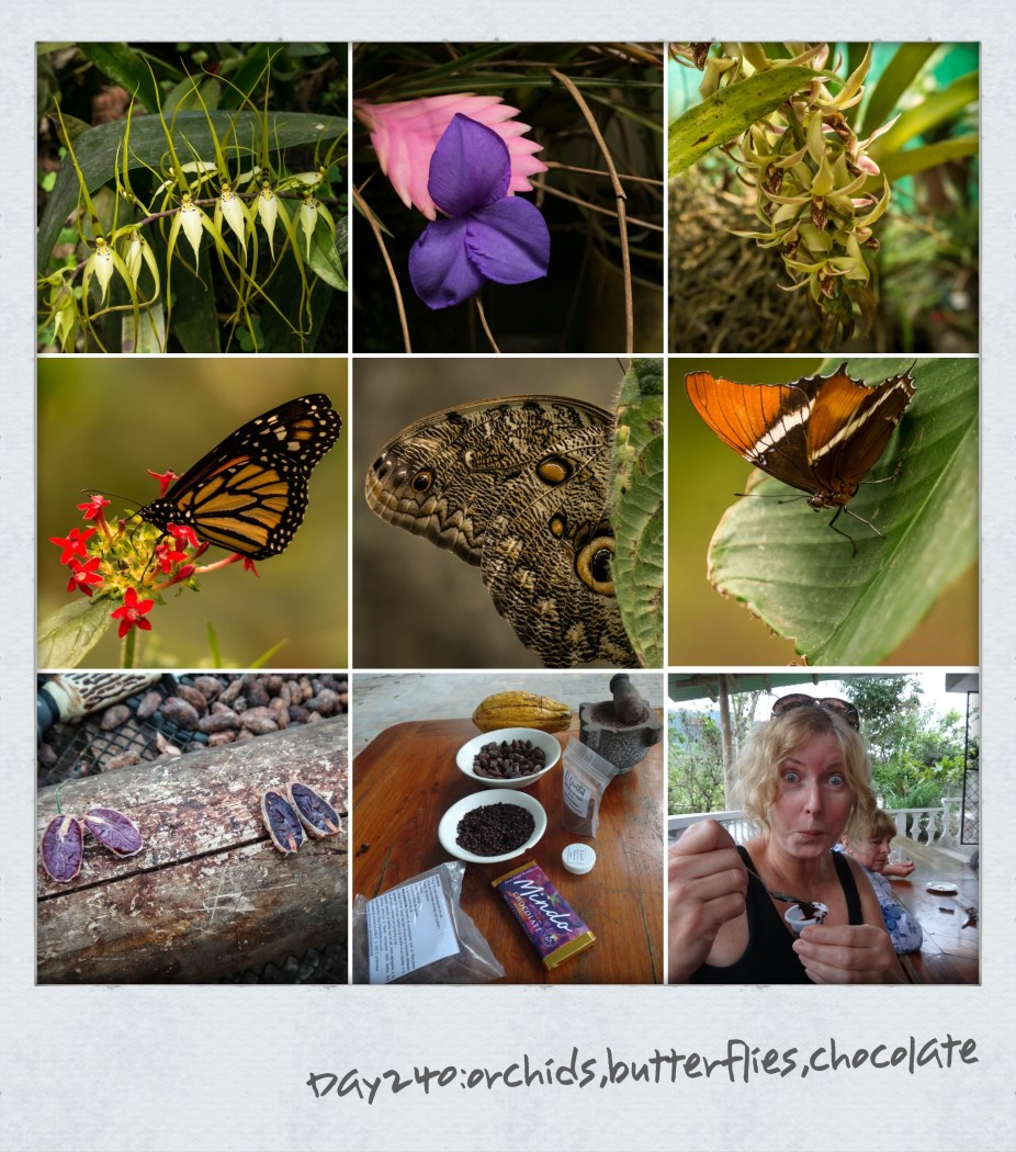 Lazy day today after our trek yesterday, so it's checking out the local orchids, butterflies and my dream comes true to visit an Ecuadorian chocolate farm and taste 100% chocolate…you can tell by my face it is bitter. Mindo chocolates has to be the most purest and tastiest chocolate we have ever tasted. Started by a lady from Michigan who lives here and couldn't get decent chocolate for her brownies so she set up her own cacao processing plant. I even have the recipe for her scrumptious brownies if anyone is interested. Like this:Like Loading...
