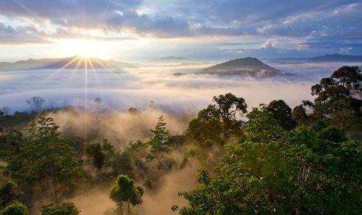 jungle-dawn