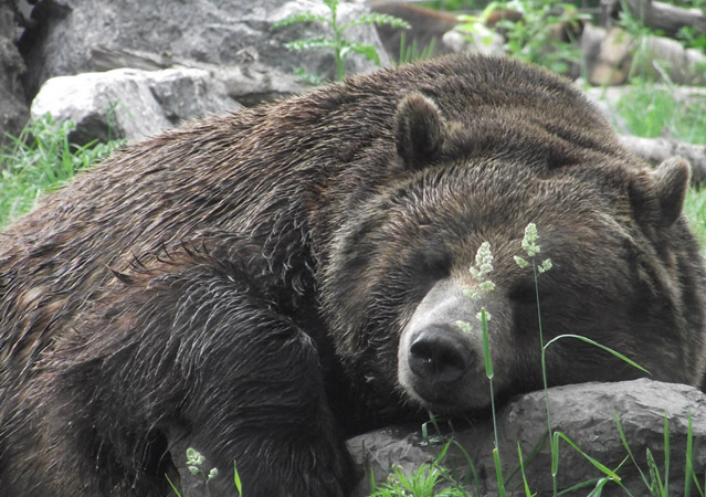 atm-bear-sleeping