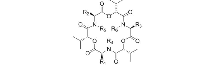 Molecular structure of enniatins