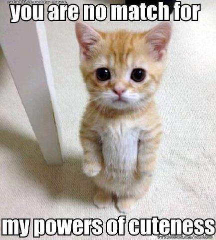 power-of-cuteness