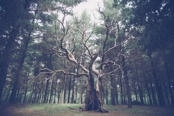 HG-setting-tree