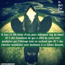 ecologie_0001