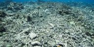 Ocean Warming Due to Climate Change Could Soon Imperil Coral Reef Restoration 1