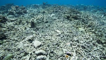 Ocean Warming Due to Climate Change Could Soon Imperil Coral Reef Restoration 9