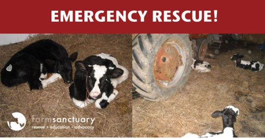 Emergency Rescue!