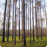 Croatan Wilderness12.png