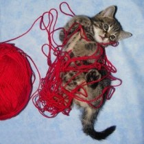 Yarn-Kitty-500