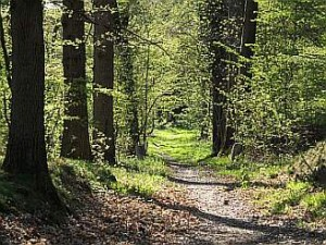 Forest_path_in_Yvelines_-_France