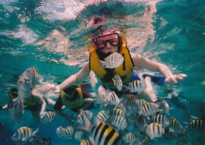 Plan your vacation with Active Caribbean Travel – Discover the best islands in the Caribbean for snorkeling & scuba diving, plus general island & Tour/Boat Operator info