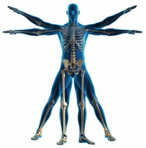 Physical Skeleton