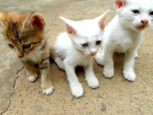 cats-205606_1280