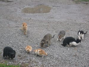 When group work is like herding cats