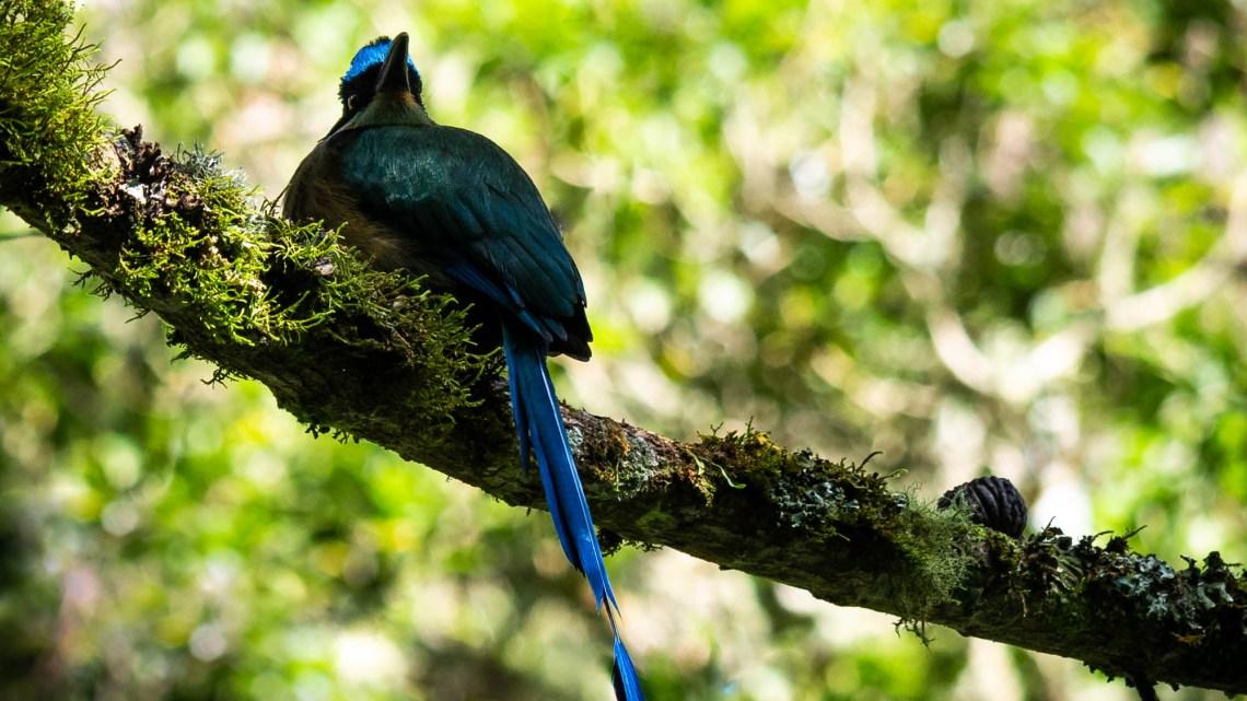 Jakiś kolorowy ptak w górach Kolumbii Activemove.pl, SPływy Pontonowe przełomem Dunajca, splywy kajakaowe Przełomem Dunajca, Przełom Dunajca, Wypożyczalnia Kajaków Atrakcje w Pieninach, Atrakcje Pienin, Kajaki na Dunajcu