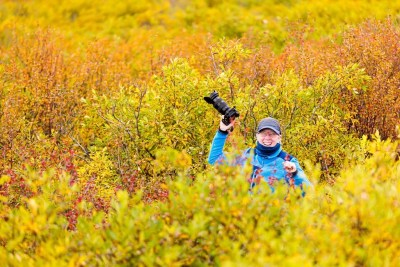 Fully immersed in tundra fall colors along the Denali Highway. © Michael DeYoung