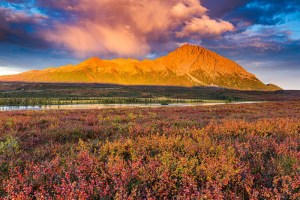Fall colors on the Denali Highway tundra