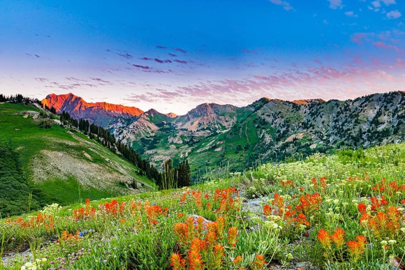 Wildflowers and first light on Wasatch Range above Alta Ski Area in Utah © Michael DeYoung