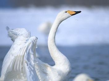 swan all sports lake oakland county mi all sports lake lapeer mi