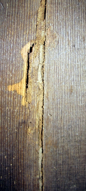 Termite Mud Tube -NCW Home Inspections