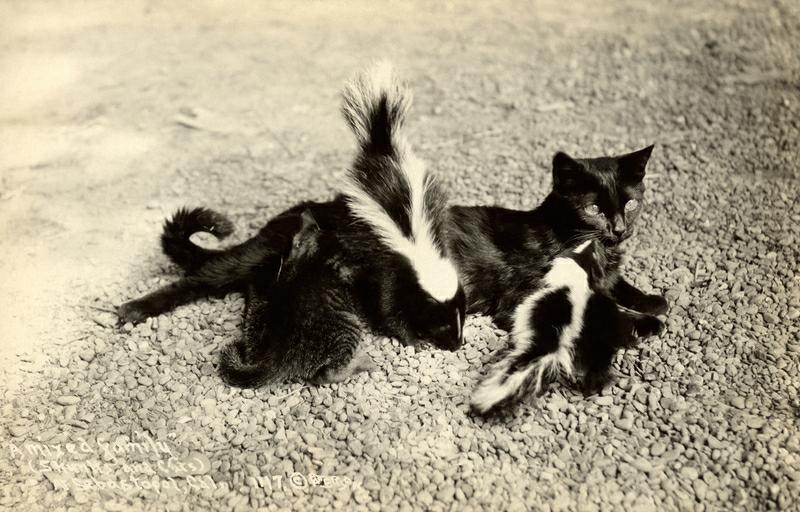 skunks and kitties