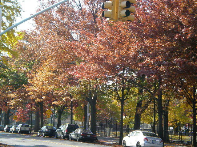 Fall leaves Brooklyn