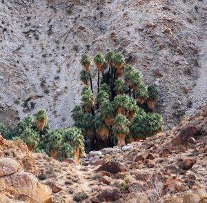 49 Palms Oasis - Joshua Tree NP