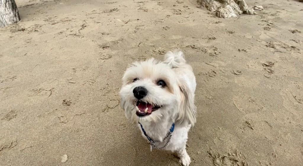 Arroyo Dog Beach