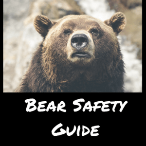 Bear Safety Guide