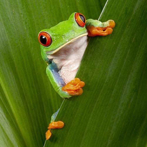 Kostaryka incentive