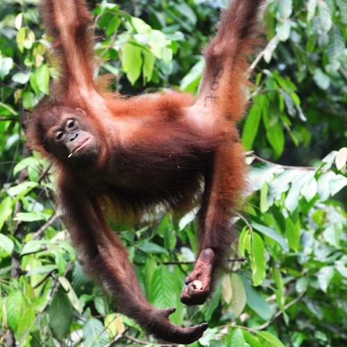 Wyjazdy na Borneo