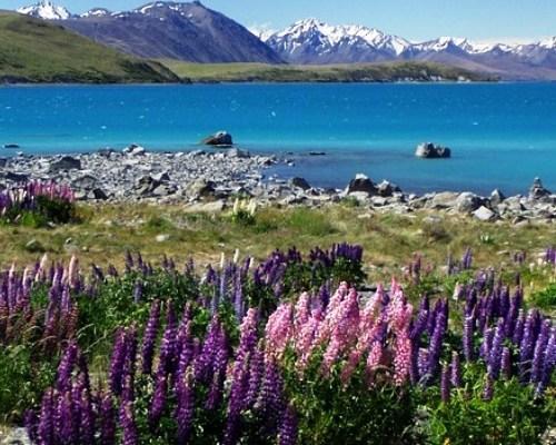 Wyjazdy do Nowej Zelandii