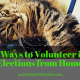 5 Ways to Volunteer in Elections from Home