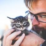 【マツコの知らない世界 ネコ画像アプリ】ネコの世界で紹介したネコアプリ『私のお話ペット/おしゃべりペット』のダウンロード方法  2019/10/15放送