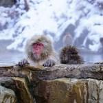 【王様のブランチ】35年連続日本一の温泉『加賀屋』の場所・予約方法  #週末一人旅