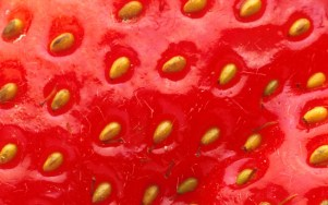 Strawberry-Close-Up-1440x900-43