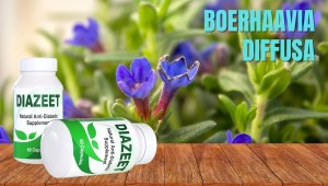 Boerhaavia Diffusa for diabetes