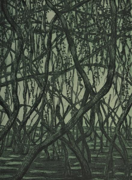 40-Mangrove vert -greavure 32X25 1920 72 dpi