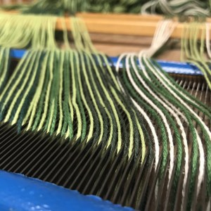 Green Warp in the Reed
