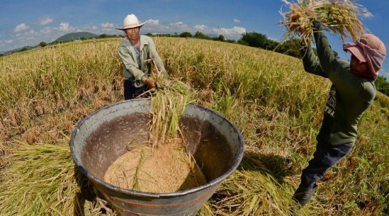 Colombia habilita a Perú exportarle 60 mil toneladas de arroz
