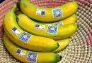 Ecuador presenta su producción en Feria Fruit Logística