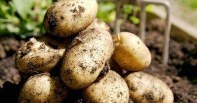21 cultivos que puedes almacenar sin nevera