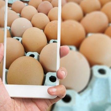 España: Tecnología Blockchain es incorporada a la producción de huevos de Avícola Rujamar